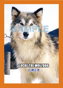 LOCKE THE WOLFDOG